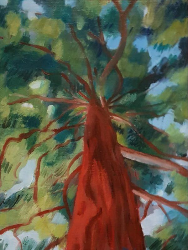 arbre, huile, nature